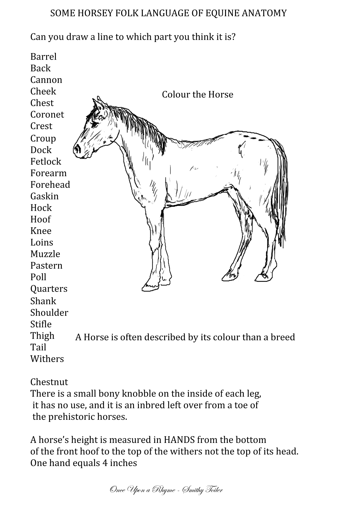 Horse muzzle anatomy 8331103 - follow4more.info